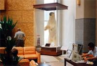 熊の剥製の展示ケース